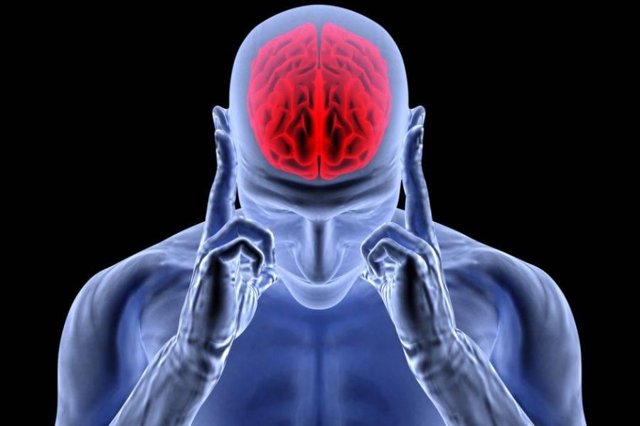 Resultado de imagem para o cerebro