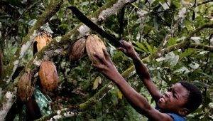 7 marcas de chocolate que exploram crianças escravas
