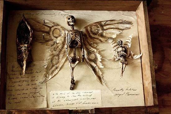 esqueleto de fada preservado encontrado em londres