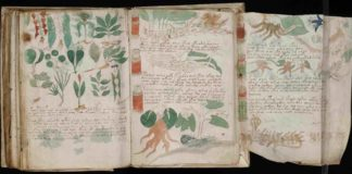 O original Manuscrito Voynich