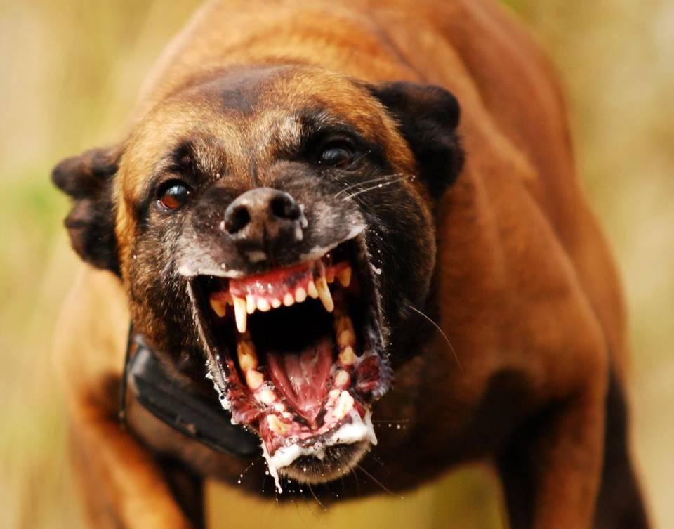 Cães, um dos animais que mais matam