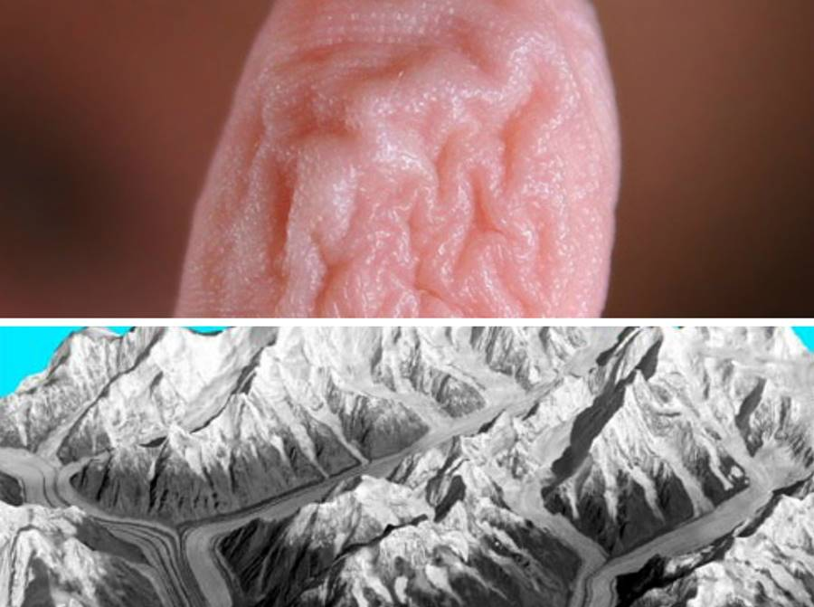 Explicação científica do por que ficamos com a pele enrugada durante o banho