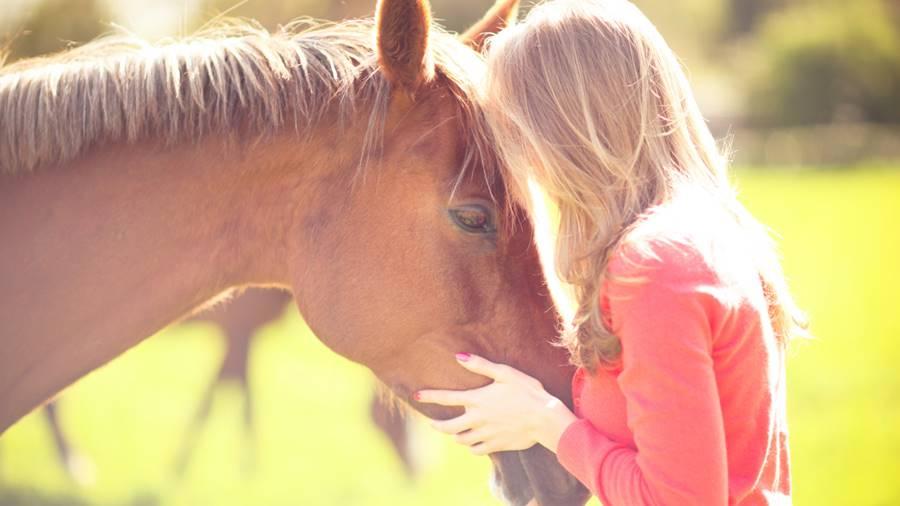 Comportamento de animais - cavalo