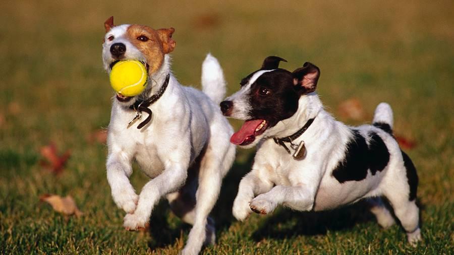 Comportamento de animais - cão