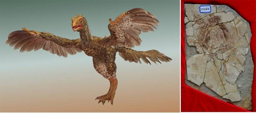 Archaeoraptor, uma das maiores fraudes arqueológicas