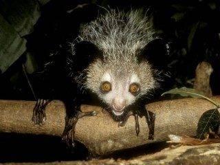 7 animais quase inofensivos, porém muito assustadores (4)