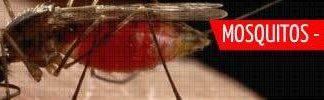 Mosquitos - Chatos e assassinos (1)