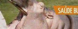 Como um hipopótamo escova os dentes! (6)